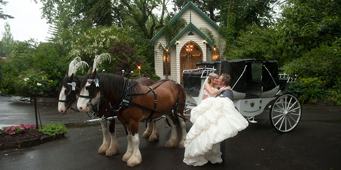 Wedding photo of a bram leigh wedding with horse and carriage